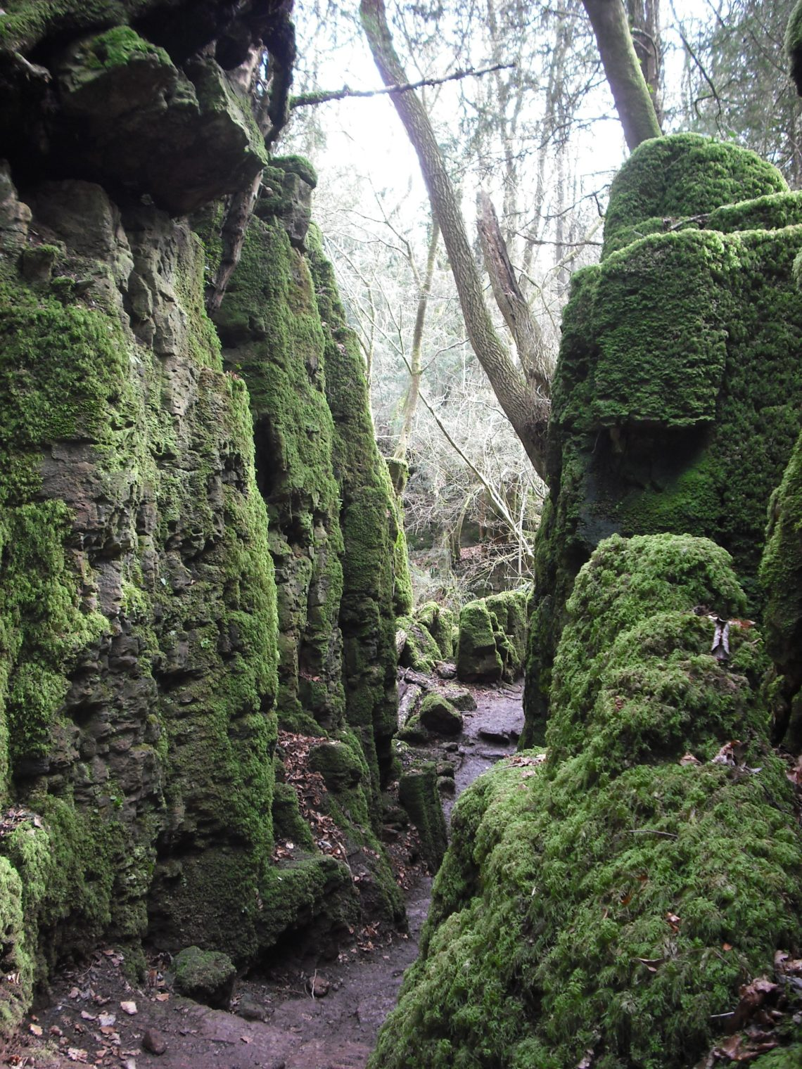 Puzzlewood formations